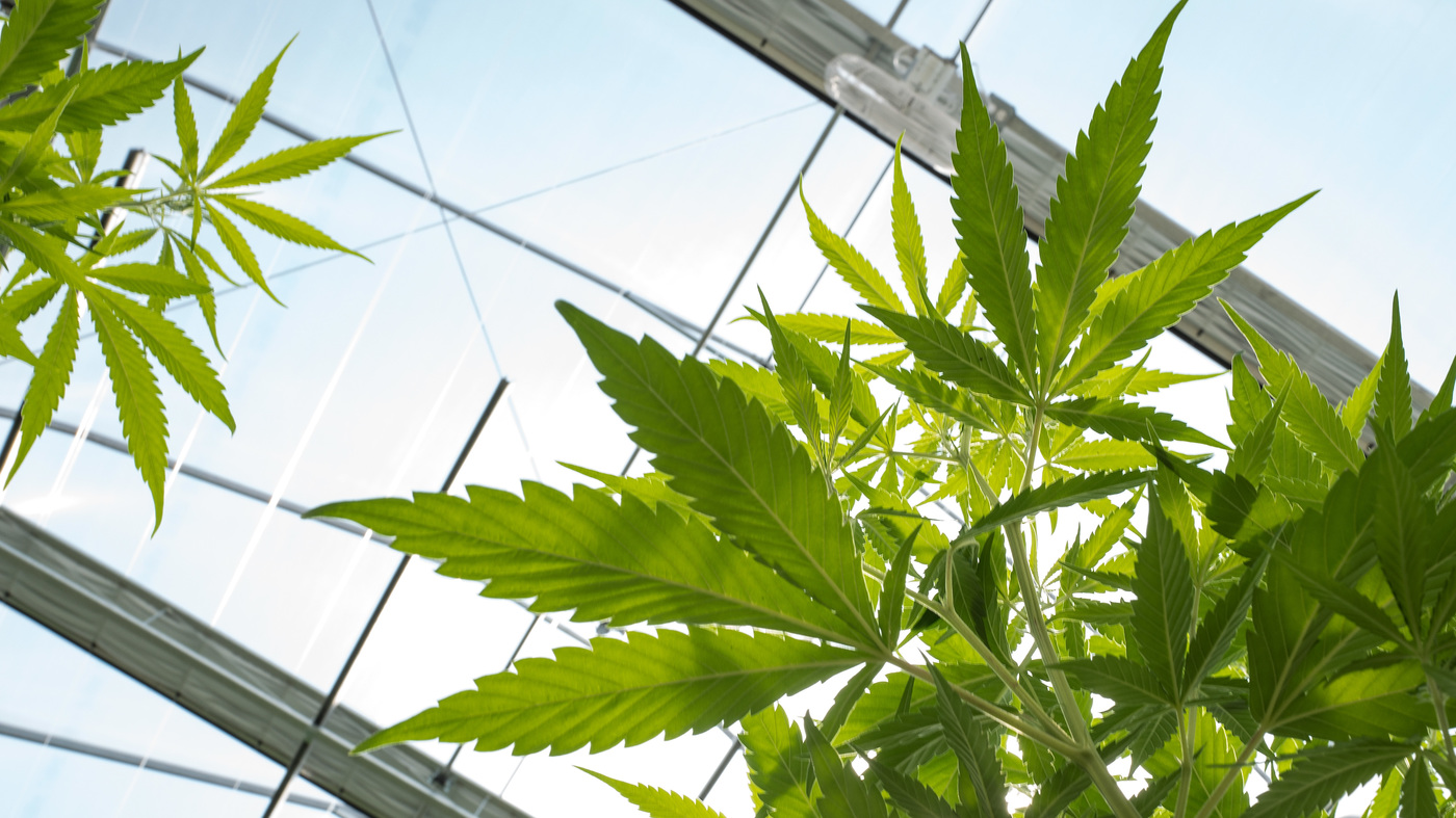 Push Toward Legalizing Marijuana