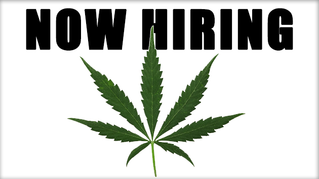 Marijuana Jobs in 2017