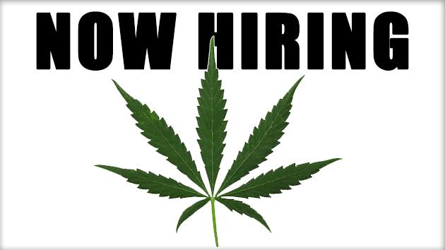 Marijuana Jobs in 2017