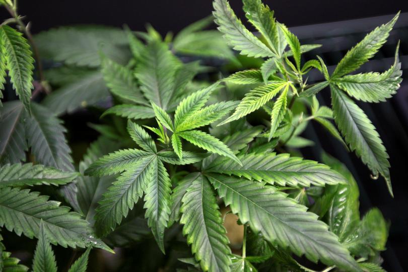 Survey Reveals Support For Recreational Marijuana In Michigan