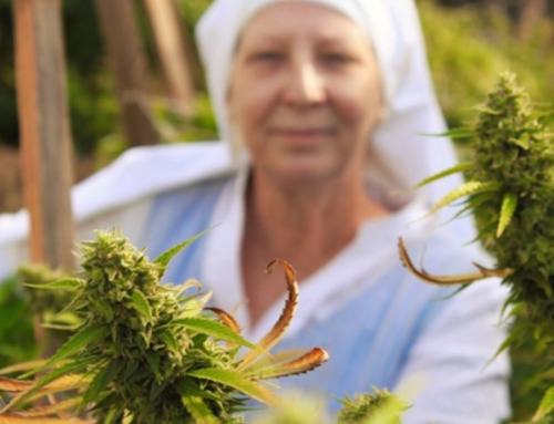 "Meet the ""Weed Nuns"" of California"