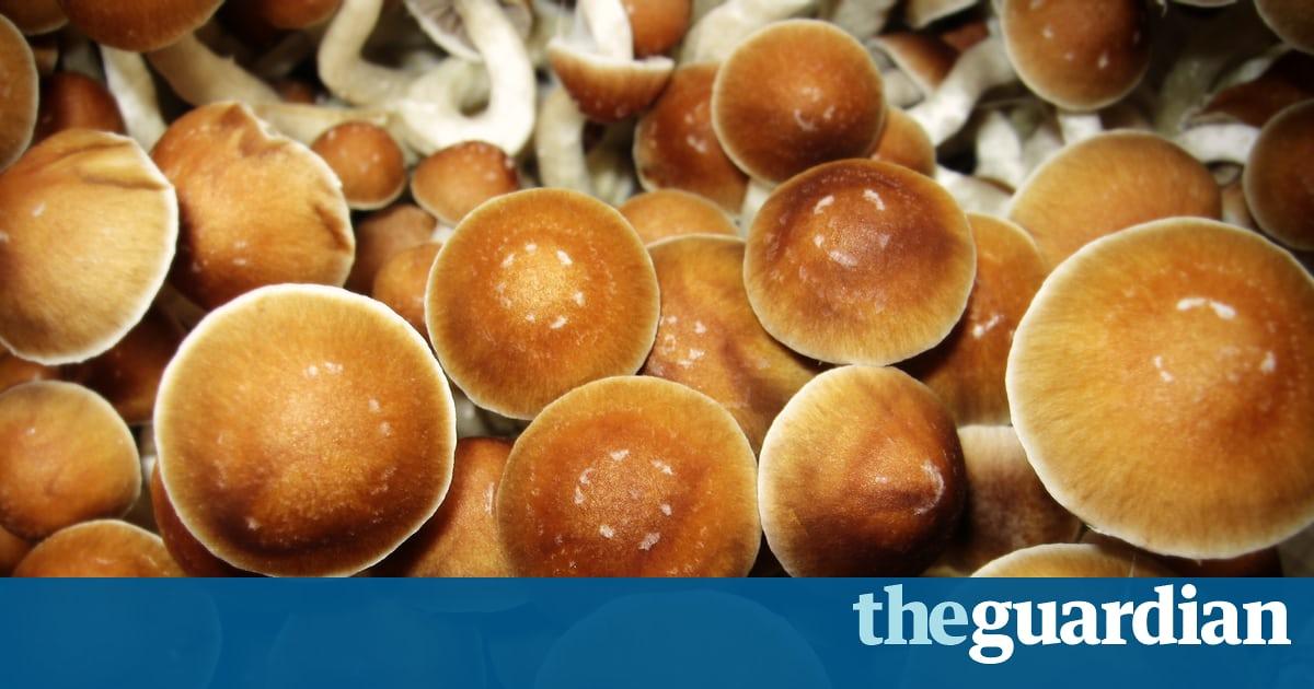 Study finds mushrooms are the safest recreational drug