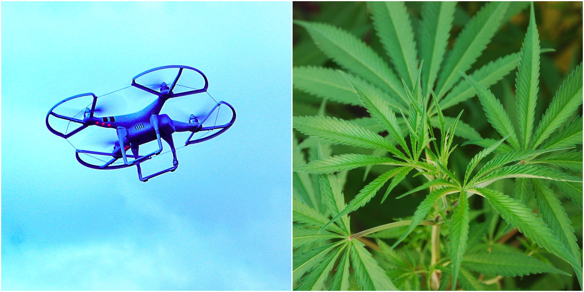 California outlaws drones from delivering weed