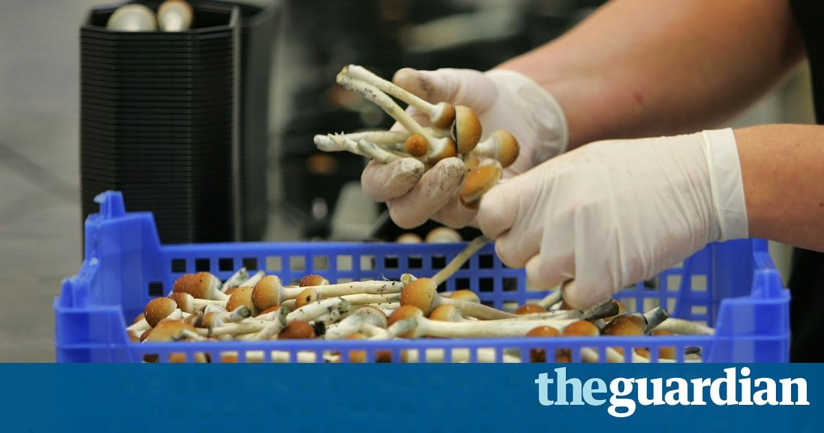 After marijuana, are magic mushrooms next to be decriminalised in California?