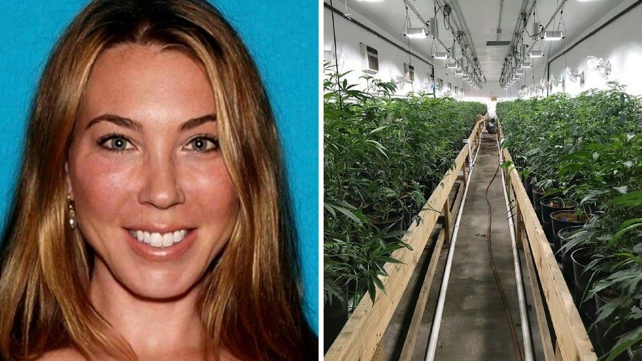 California 'weed fortress' had 35,000 marijuana plants inside, cops say