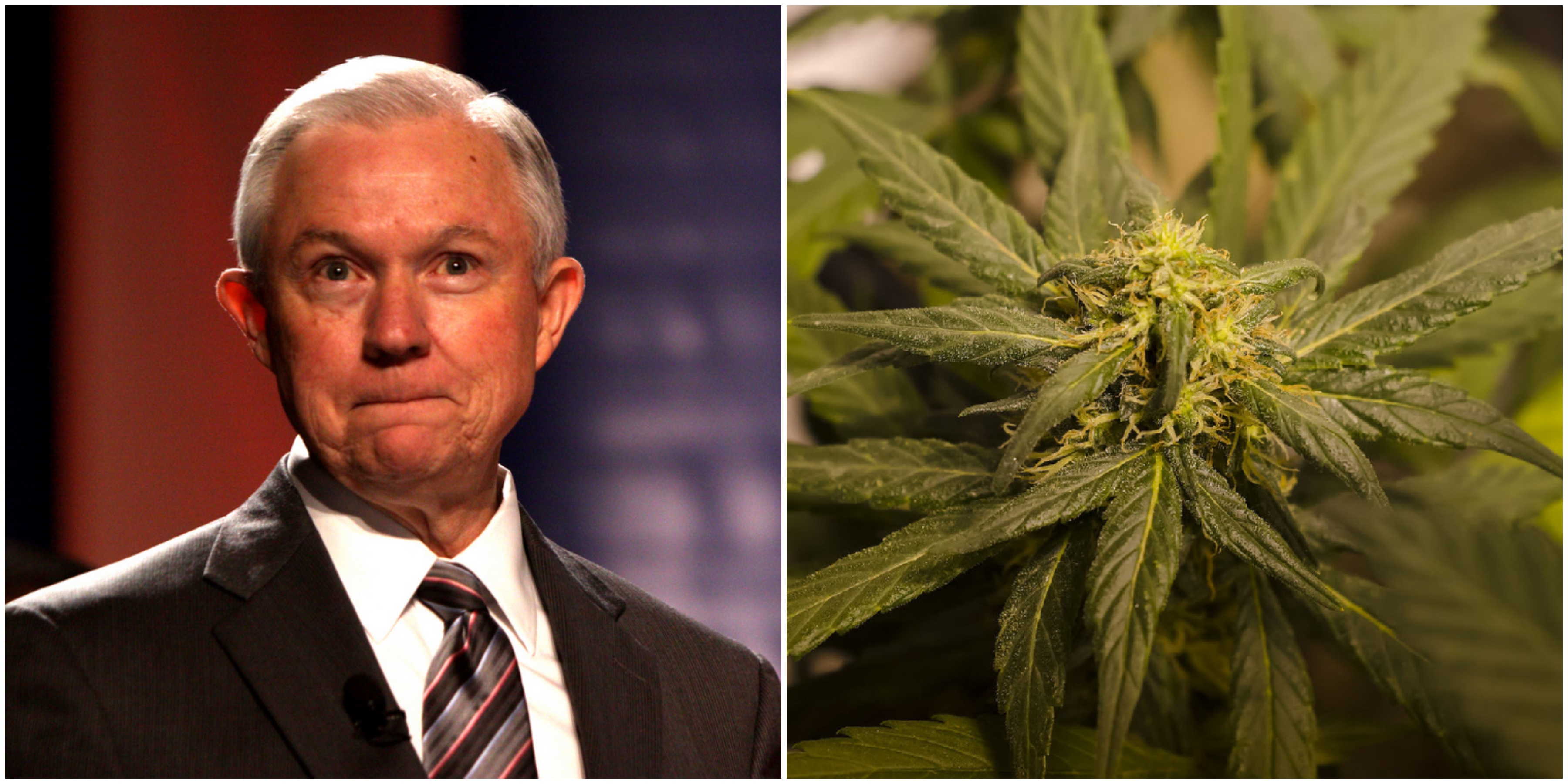 Trump administration aims to crack down on legal marijuana