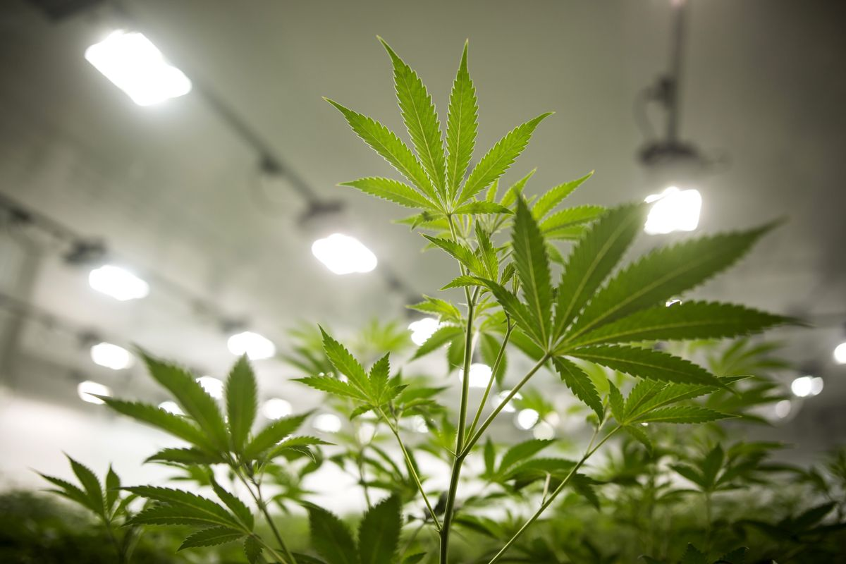 This Pot Company Posts Record Sales as CEO Eyes Deals