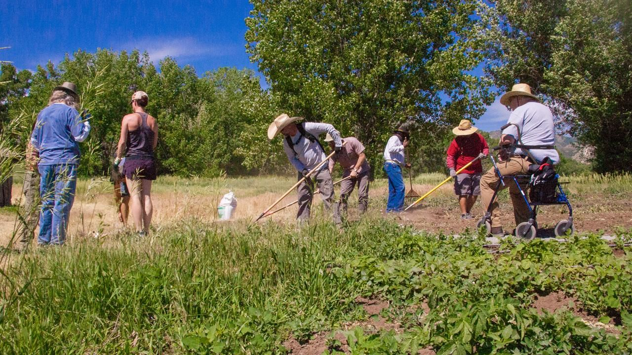 How a farming nonprofit helps veterans reintegrate into civilian life and recover from PTSD